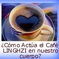 C�mo Act�a el Cafe LINGZHI en nuestro cuerpo