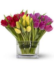 Florero de treinta tulipanes