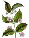 PLANTAS MEDICINALES DEL PERU